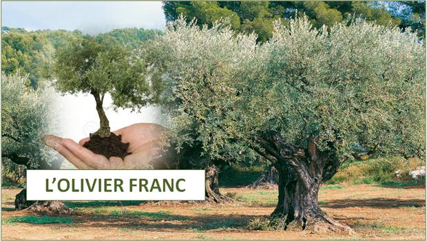 L OLIVIER FRANC 2