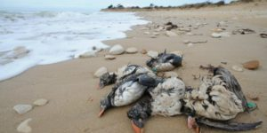 Carnage inimaginable :  Fukushima tuant l'océan pacifique
